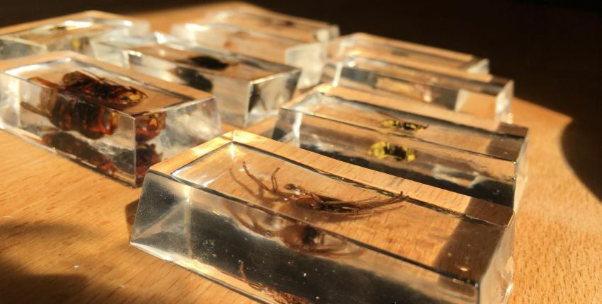 DIY : Ma collection d'insectes